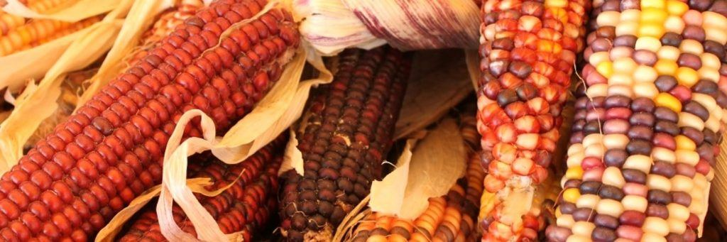 nativeamericanfood