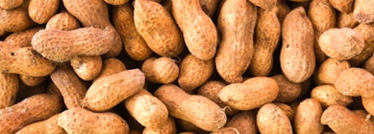peanuts.'