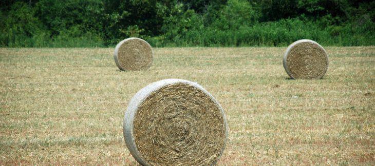 One retires, two hired at Arkansas Farm Bureau - Talk Business & Politics