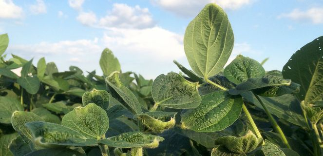 Dicamba rule approved for 2020 growing season, public comment period coming
