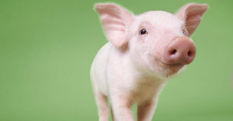 House sponsor pulls down Senate bill to transfer oversight of state's animal waste program thumbnail