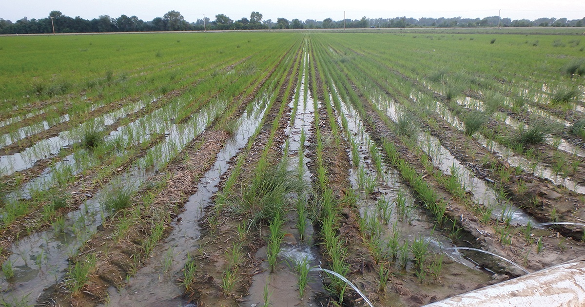 USDA to undertake rare additional records accumulating on crops thumbnail