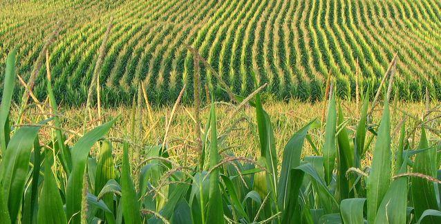 Arkansas Farm Bureau President Randy Veach will not seek new term thumbnail